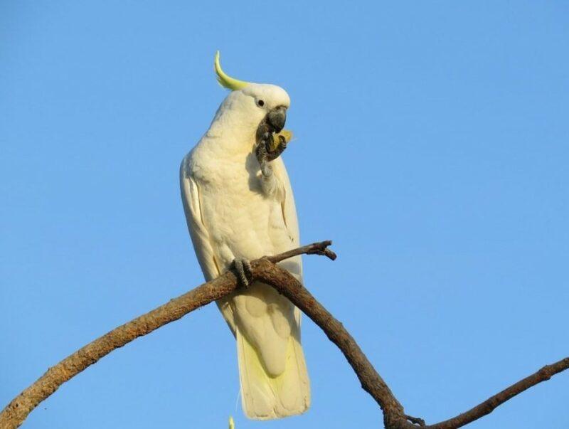 Jenis Burung Paruh Bengkok