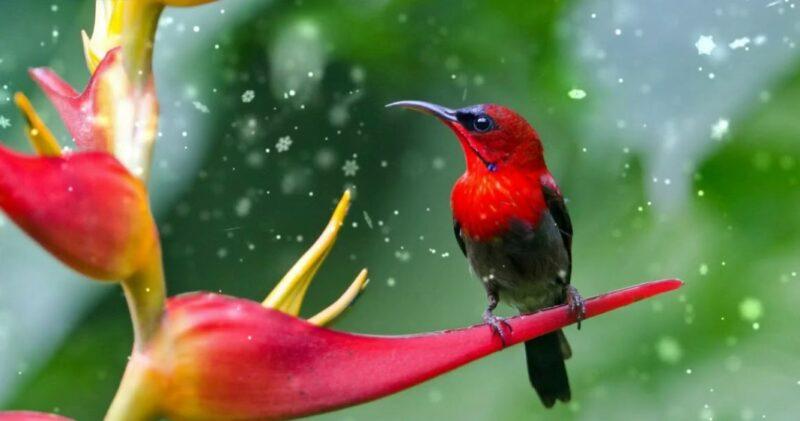 Inilah 14 Jenis Burung Kolibri Di Indonesia Lengkap Beserta Gambarnya